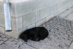 сладко спящий  друг человеков