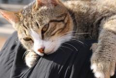 любимая кошка матушки С.  и  матушки S. )