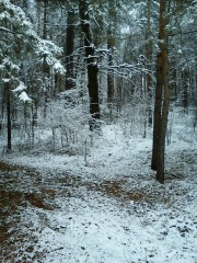 Морозко разукрасил лес
