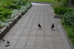 Тоже в черном...только смирения им не хватает - разважничались))))
