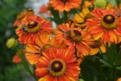 Пчелки трудяги