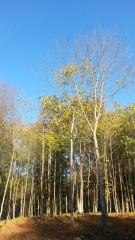 Листья желтые..или Осень в Оптиной