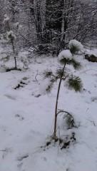 малютка))) со снежными пумпончиками