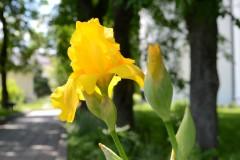 История одного цветка...