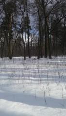 Полосатый снег