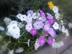 Цветы (4) 11.08.2012