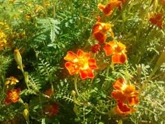Цветы (2) 11.08.2012
