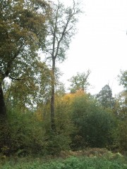 Осень в Скитском лесу