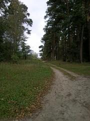 Дорога к источнику Пафнутия Боровского