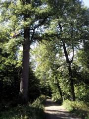 Скитской лес