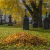 Осень на некрополе (снимок сделан 3 октября 2016 г.)