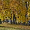 Осень в разгаре (снимок сделан 1 октября 2016 г.)