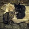 Брошенные котята (снимок сделан 25 сентября 2011 г.)